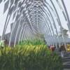 Un invernadero para generar hidrógeno, el HYDROGENERATOR !