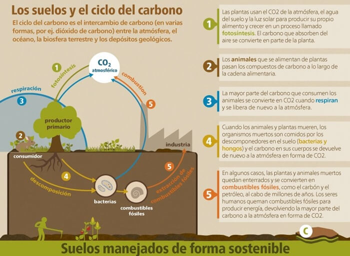 suelos-ciclo-carbono-infografa